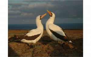 SEagull male and female